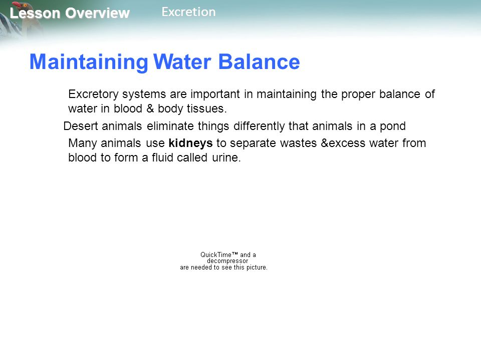 Lesson Overview Lesson OverviewExcretion Maintaining Water Balance Excretory systems are important in maintaining the proper balance of water in blood