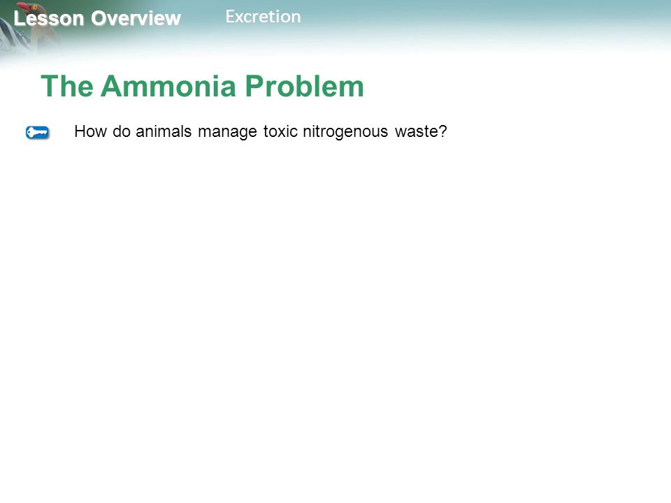 Lesson Overview Lesson OverviewExcretion The Ammonia Problem How do animals manage toxic nitrogenous waste?