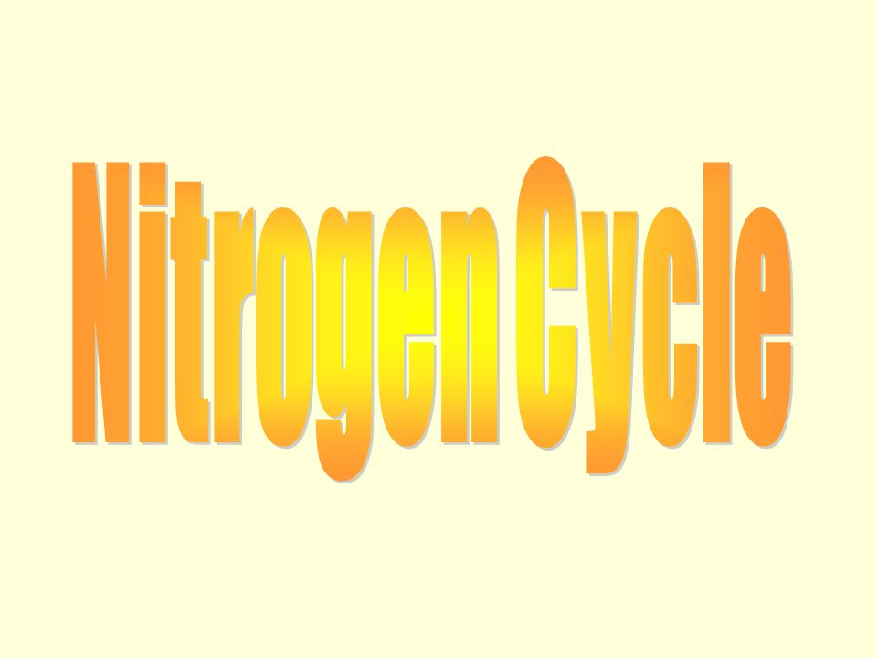 Living thing require nutrient cycles ( nitrogen cycle) because - Some organism ( decomposers) obtain energy from the break down of dead bodies and waste Raw materials (element like Nitrogen and Carbon) are recycled for use by the next generation.