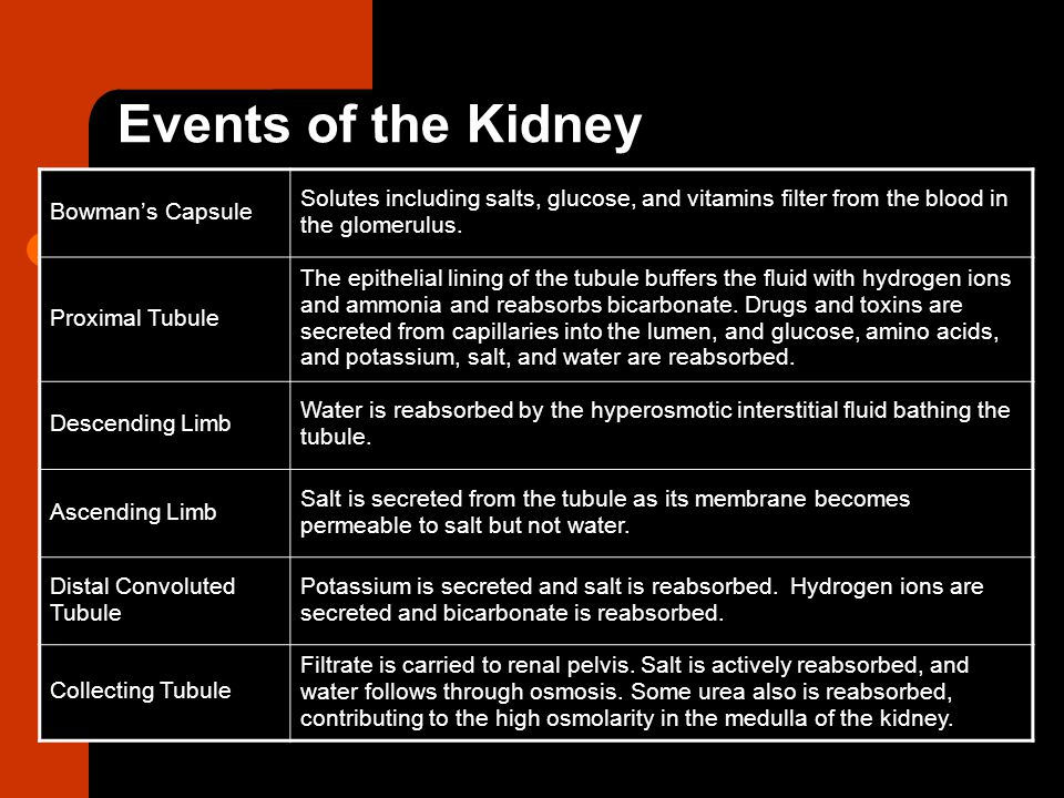Events of the Kidney Bowman's Capsule Solutes including salts, glucose, and vitamins filter from the blood in the glomerulus. Proximal Tubule The epit
