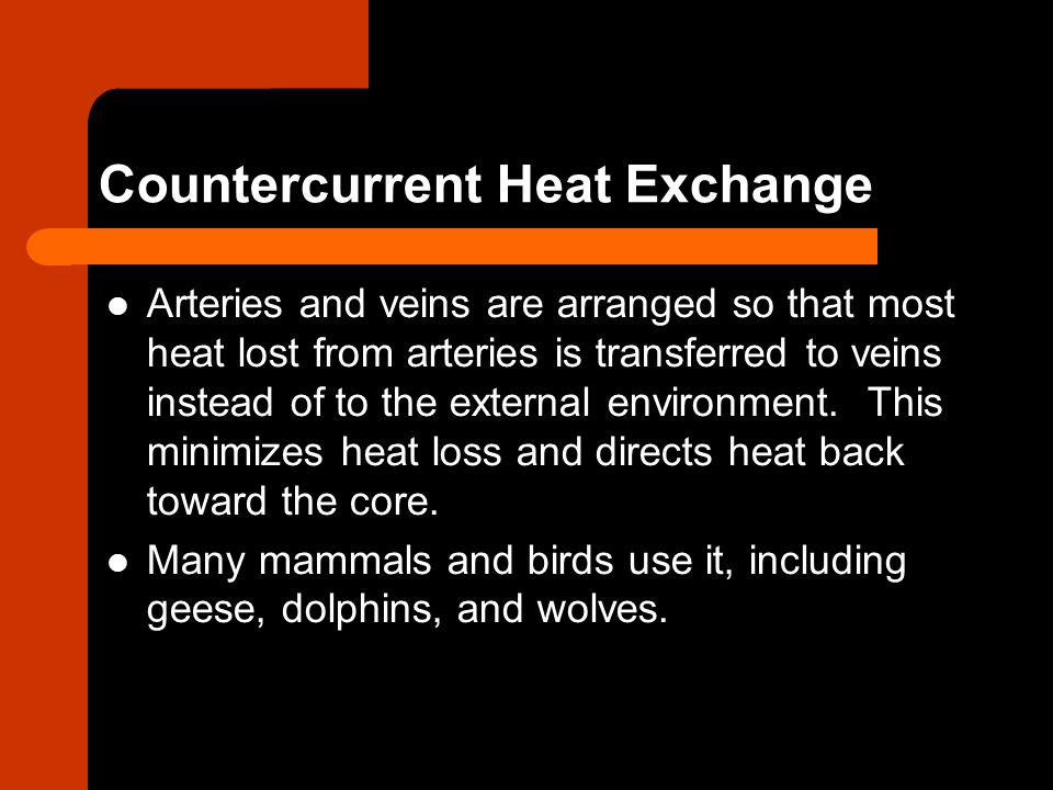 Countercurrent Heat Exchange Arteries and veins are arranged so that most heat lost from arteries is transferred to veins instead of to the external e
