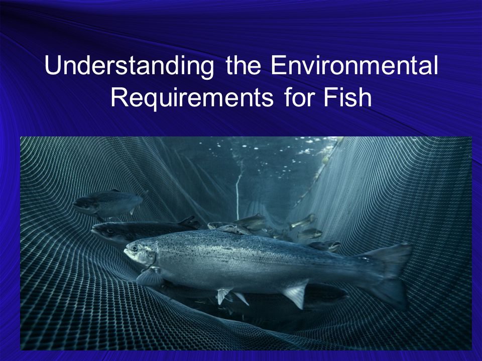 Understanding the Environmental Requirements for Fish