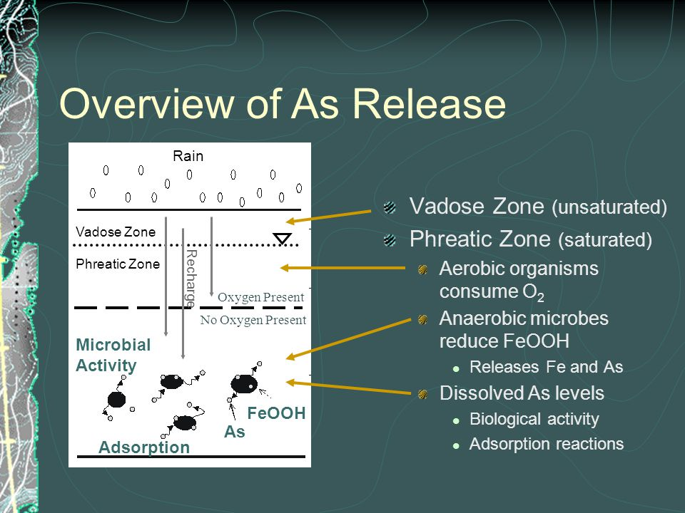 Vadose Zone (unsaturated) Phreatic Zone (saturated) Aerobic organisms consume O 2 Anaerobic microbes reduce FeOOH Releases Fe and As Dissolved As levels Biological activity Adsorption reactions Overview of As Release Vadose Zone Phreatic Zone Rain Oxygen Present No Oxygen Present As FeOOH Microbial Activity Adsorption Recharge