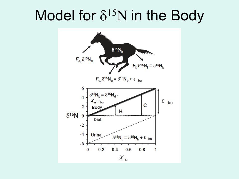 Model for  15 N in the Body