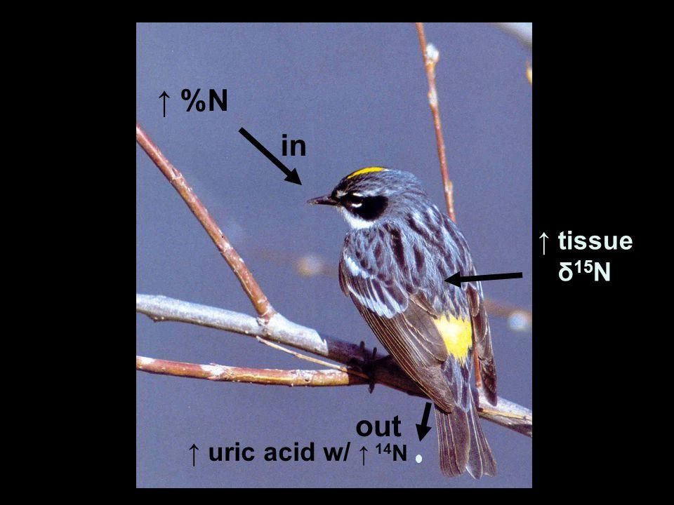 ↑ %N ↑ uric acid w/ ↑ 14 N in out ↑ tissue δ 15 N
