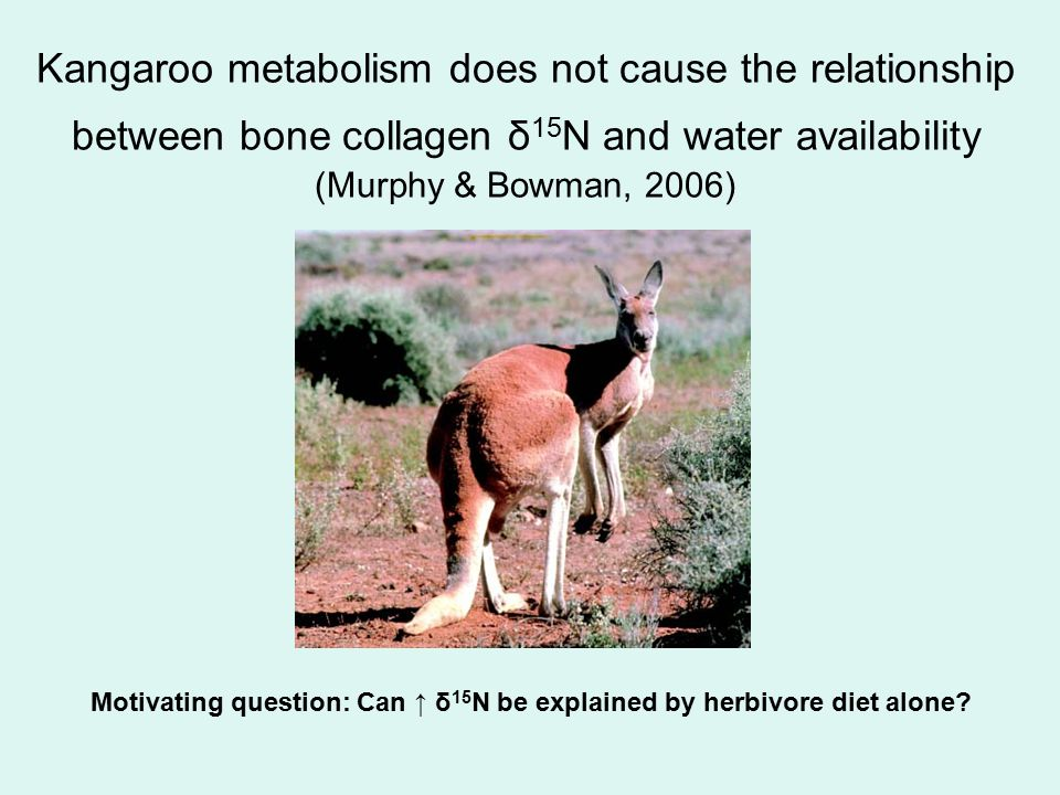 Kangaroo metabolism does not cause the relationship between bone collagen δ 15 N and water availability (Murphy & Bowman, 2006) Motivating question: C