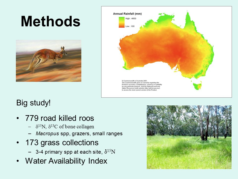 Methods Big study! 779 road killed roos –  15 N,  13 C of bone collagen –Macropus spp, grazers, small ranges 173 grass collections –3-4 primary spp
