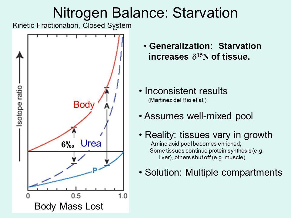 Nitrogen Balance: Starvation Body Mass Lost Urea Body 6‰6‰ Generalization: Starvation increases  15 N of tissue. Inconsistent results (Martinez del R