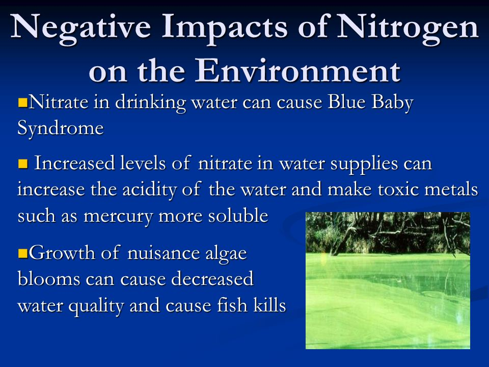 Negative Impacts of Nitrogen on the Environment Nitrate in drinking water can cause Blue Baby Syndrome Nitrate in drinking water can cause Blue Baby Syndrome Increased levels of nitrate in water supplies can increase the acidity of the water and make toxic metals such as mercury more soluble Increased levels of nitrate in water supplies can increase the acidity of the water and make toxic metals such as mercury more soluble Growth of nuisance algae blooms can cause decreased water quality and cause fish kills Growth of nuisance algae blooms can cause decreased water quality and cause fish kills