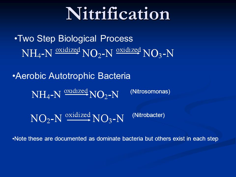 Nitrification Two Step Biological Process Aerobic Autotrophic Bacteria (Nitrosomonas) (Nitrobacter) Note these are documented as dominate bacteria but others exist in each step