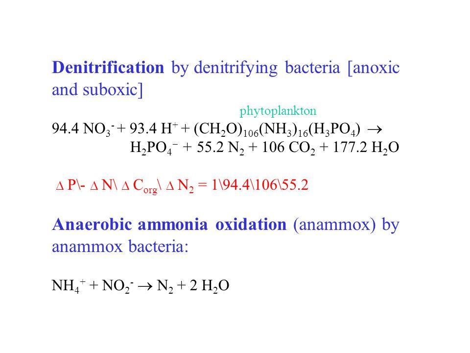 Denitrification by denitrifying bacteria [anoxic and suboxic] phytoplankton 94.4 NO 3 - + 93.4 H + + (CH 2 O) 106 (NH 3 ) 16 (H 3 PO 4 )  H 2 PO 4  + 55.2 N 2 + 106 CO 2 + 177.2 H 2 O  P\-  N\  C org \  N 2 = 1\94.4\106\55.2 Anaerobic ammonia oxidation (anammox) by anammox bacteria: NH 4 + + NO 2 -  N 2 + 2 H 2 O