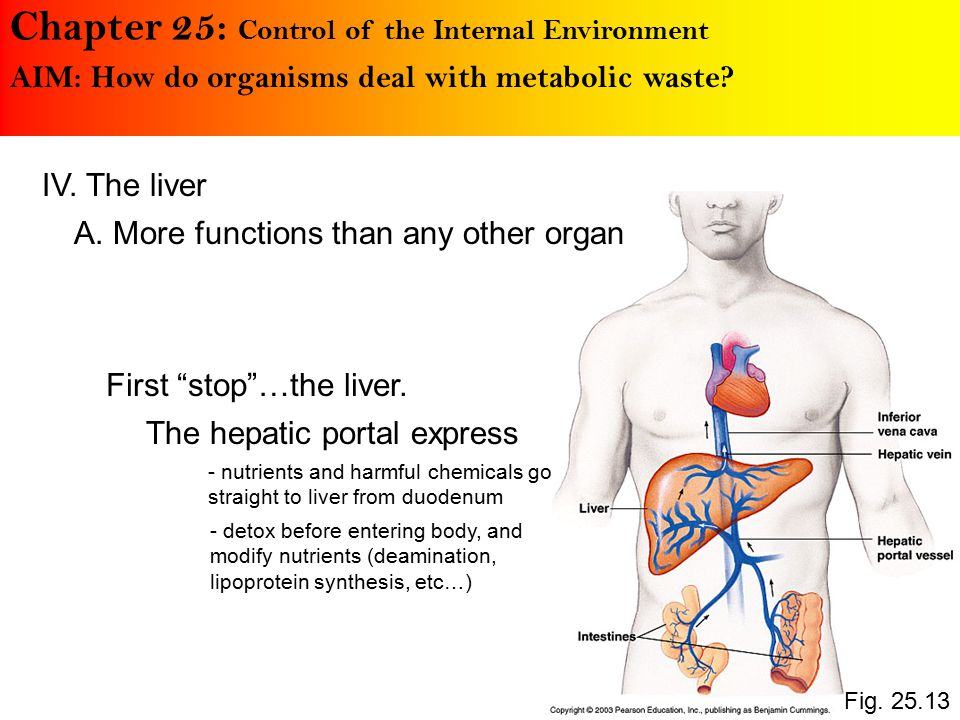 Chapter 25: Control of the Internal Environment AIM: How do organisms deal with metabolic waste.