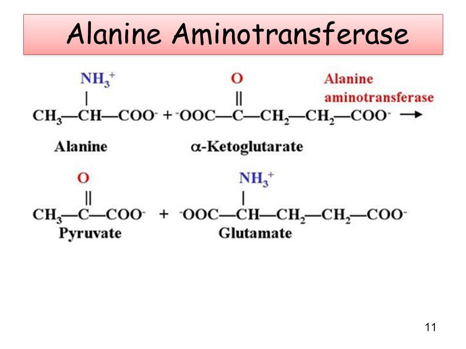 Alanine Aminotransferase 11