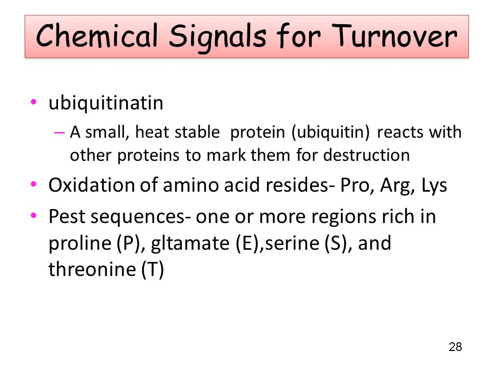 Chemical Signals for Turnover ubiquitinatin – A small, heat stable protein (ubiquitin) reacts with other proteins to mark them for destruction Oxidation of amino acid resides- Pro, Arg, Lys Pest sequences- one or more regions rich in proline (P), gltamate (E),serine (S), and threonine (T) 28