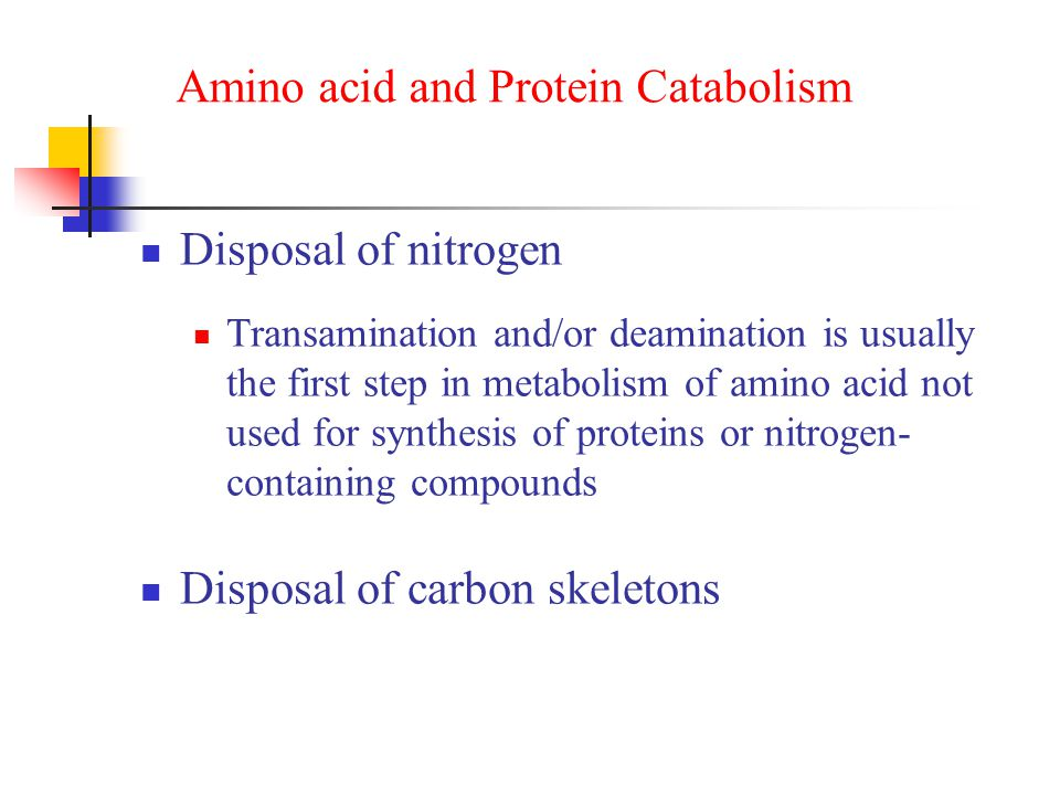 Amino acid and Protein Catabolism Disposal of nitrogen Transamination and/or deamination is usually the first step in metabolism of amino acid not used for synthesis of proteins or nitrogen- containing compounds Disposal of carbon skeletons