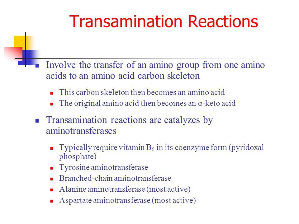 Involve the transfer of an amino group from one amino acids to an amino acid carbon skeleton This carbon skeleton then becomes an amino acid The origi