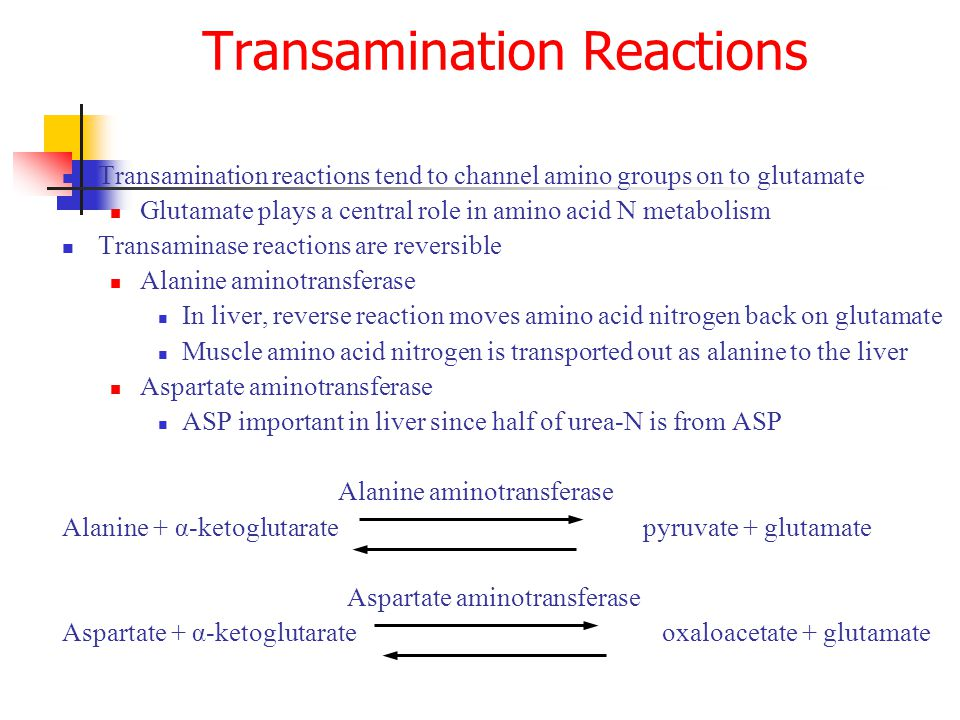 Transamination reactions tend to channel amino groups on to glutamate Glutamate plays a central role in amino acid N metabolism Transaminase reactions are reversible Alanine aminotransferase In liver, reverse reaction moves amino acid nitrogen back on glutamate Muscle amino acid nitrogen is transported out as alanine to the liver Aspartate aminotransferase ASP important in liver since half of urea-N is from ASP Alanine aminotransferase Alanine + α-ketoglutarate pyruvate + glutamate Aspartate aminotransferase Aspartate + α-ketoglutarate oxaloacetate + glutamate Transamination Reactions