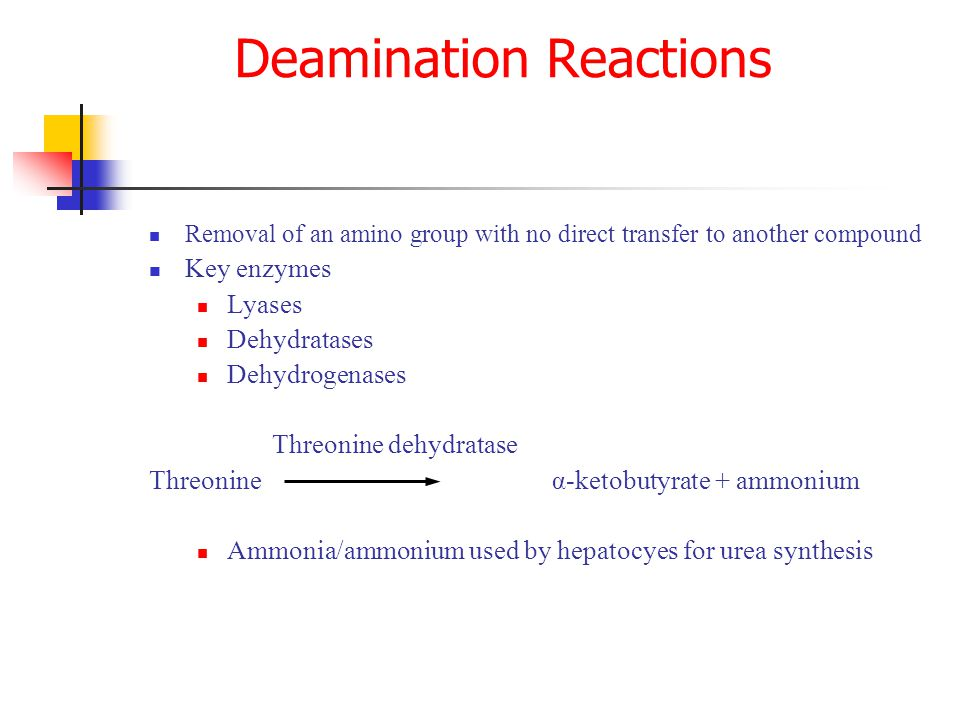 Removal of an amino group with no direct transfer to another compound Key enzymes Lyases Dehydratases Dehydrogenases Threonine dehydratase Threonine α