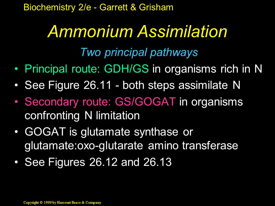 Biochemistry 2/e - Garrett & Grisham Copyright © 1999 by Harcourt Brace & Company Ammonium Assimilation Two principal pathways Principal route: GDH/GS in organisms rich in N See Figure 26.11 - both steps assimilate N Secondary route: GS/GOGAT in organisms confronting N limitation GOGAT is glutamate synthase or glutamate:oxo-glutarate amino transferase See Figures 26.12 and 26.13
