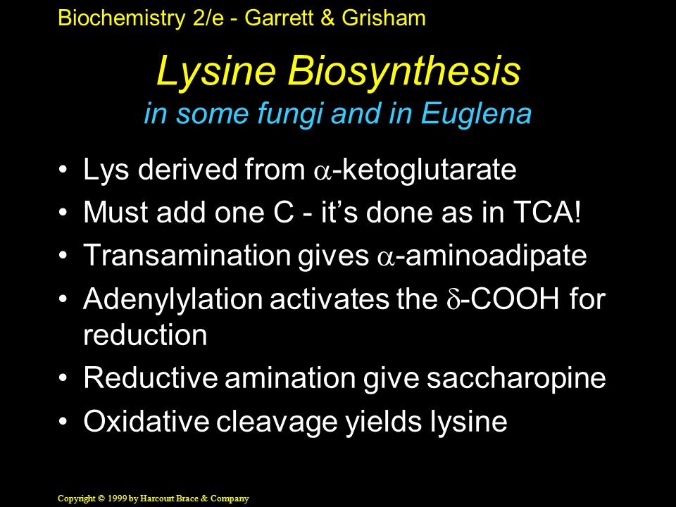 Biochemistry 2/e - Garrett & Grisham Copyright © 1999 by Harcourt Brace & Company Lysine Biosynthesis in some fungi and in Euglena Lys derived from  -ketoglutarate Must add one C - it's done as in TCA.