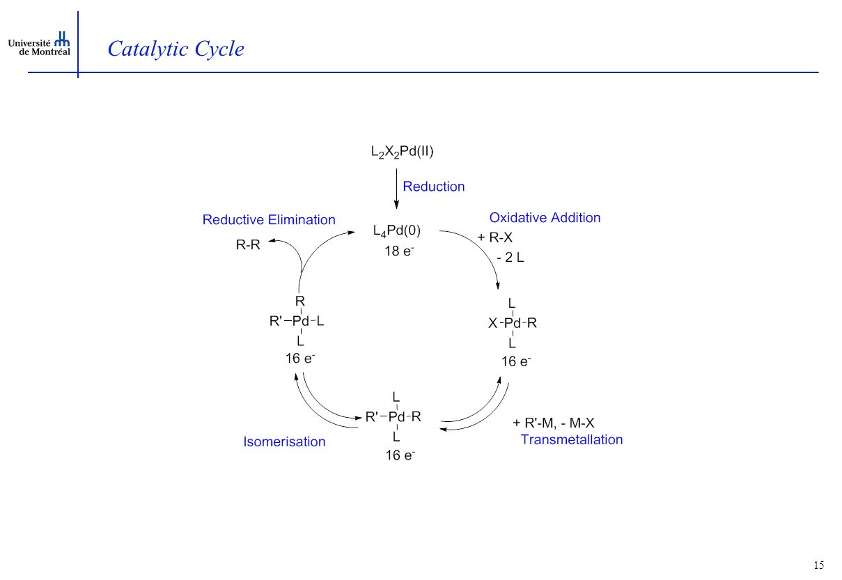 15 Catalytic Cycle