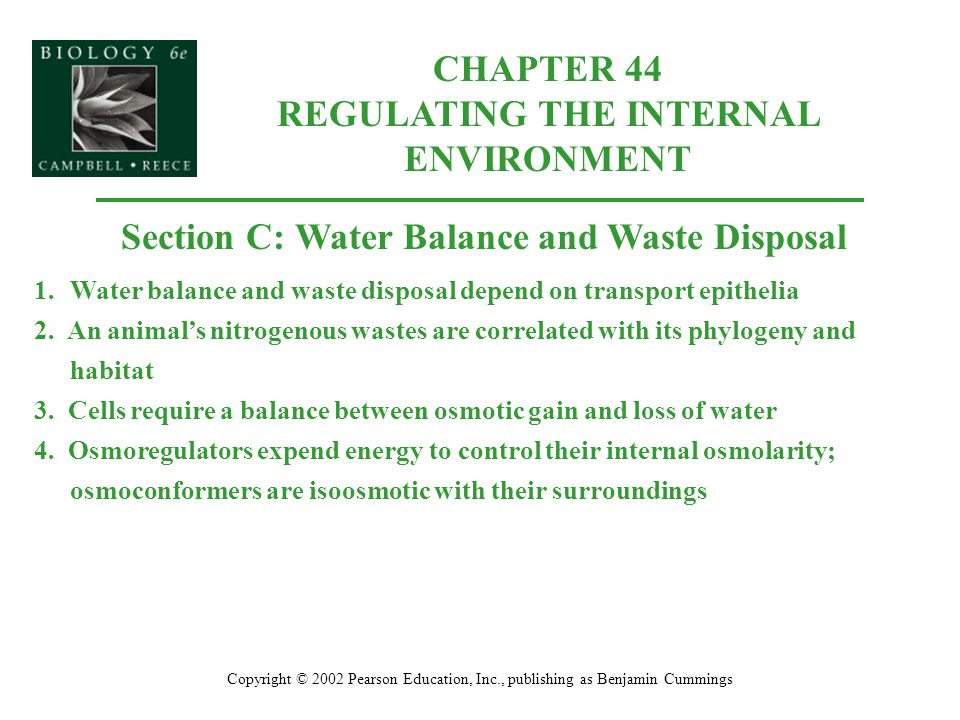 CHAPTER 44 REGULATING THE INTERNAL ENVIRONMENT Copyright © 2002 Pearson Education, Inc., publishing as Benjamin Cummings Section C: Water Balance and Waste Disposal 1.Water balance and waste disposal depend on transport epithelia 2.
