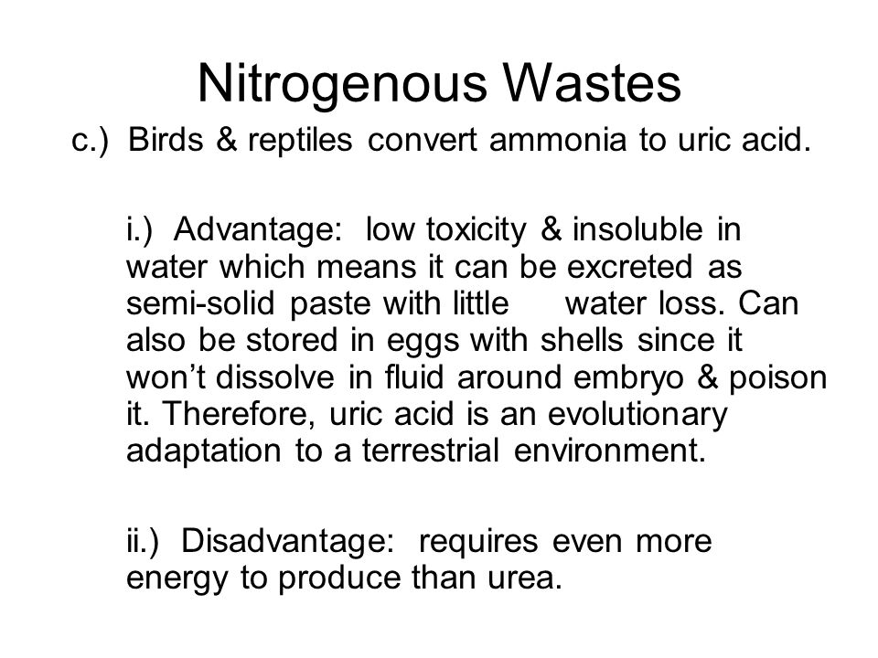 Nitrogenous Wastes c.) Birds & reptiles convert ammonia to uric acid. i.) Advantage: low toxicity & insoluble in water which means it can be excreted