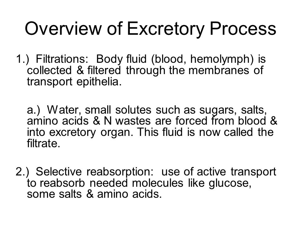 Overview of Excretory Process 1.) Filtrations: Body fluid (blood, hemolymph) is collected & filtered through the membranes of transport epithelia. a.)