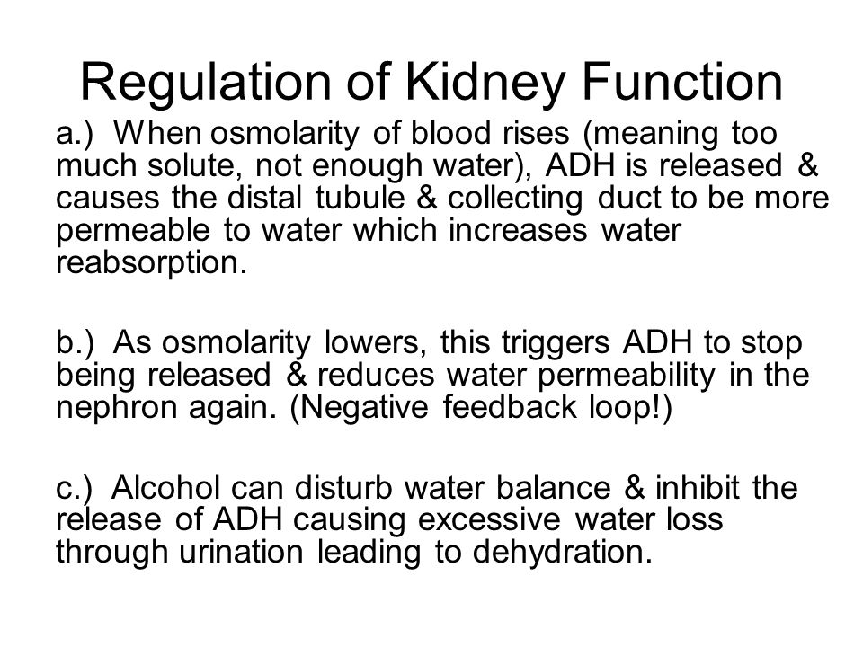 Regulation of Kidney Function a.) When osmolarity of blood rises (meaning too much solute, not enough water), ADH is released & causes the distal tubu