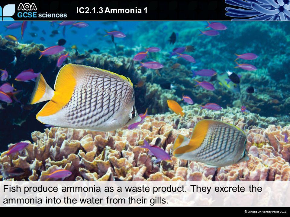 IC2.1.3 Ammonia 1 © Oxford University Press 2011  Ammonia is a compound.