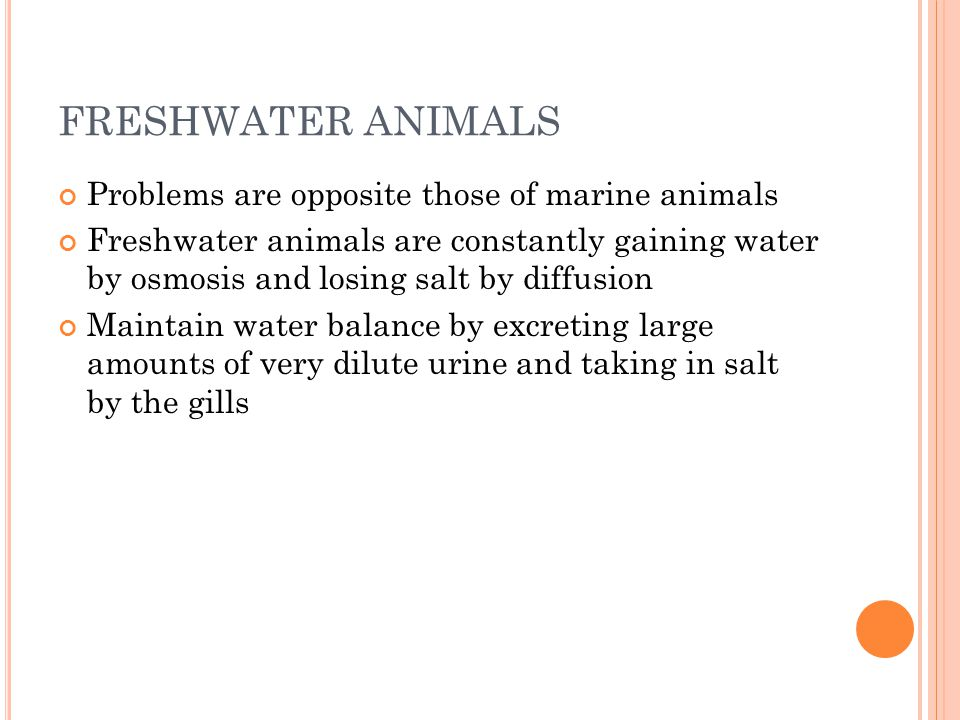 FRESHWATER ANIMALS Problems are opposite those of marine animals Freshwater animals are constantly gaining water by osmosis and losing salt by diffusion Maintain water balance by excreting large amounts of very dilute urine and taking in salt by the gills