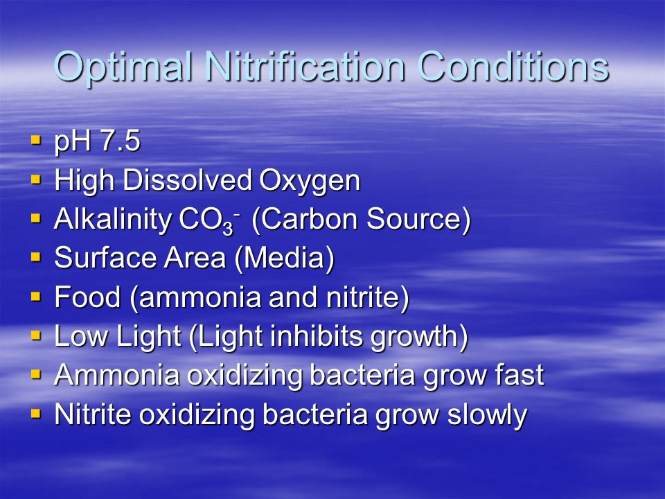 Optimal Nitrification Conditions  pH 7.5  High Dissolved Oxygen  Alkalinity CO 3 - (Carbon Source)  Surface Area (Media)  Food (ammonia and nitrite)  Low Light (Light inhibits growth)  Ammonia oxidizing bacteria grow fast  Nitrite oxidizing bacteria grow slowly