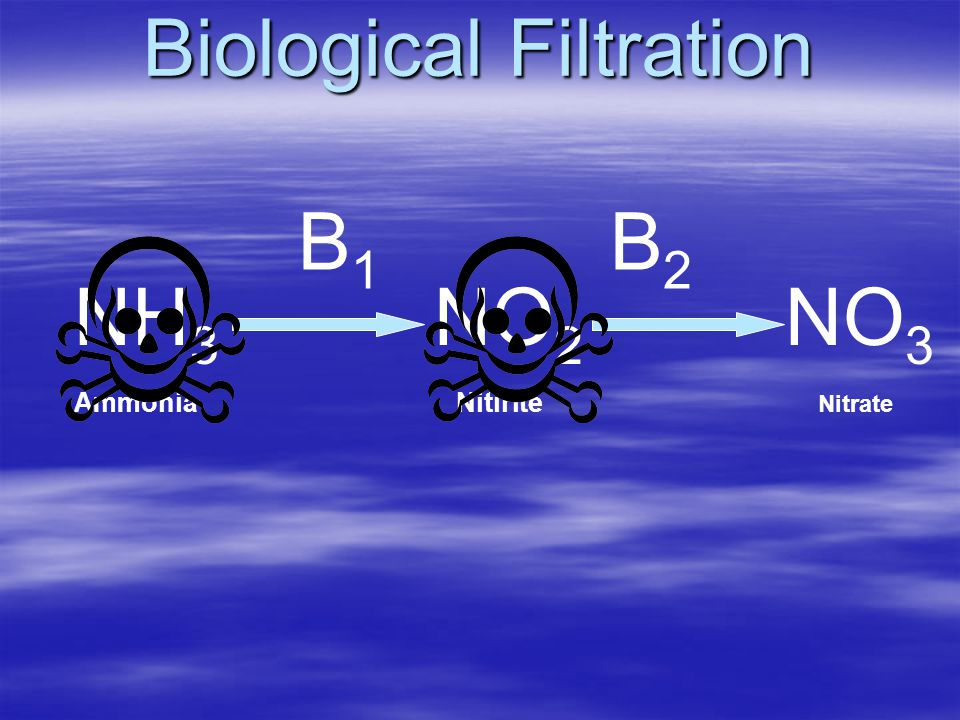 Biological Filtration B1B1 B2B2 NH 3 Ammonia NO 2 Nitirite NO 3 Nitrate