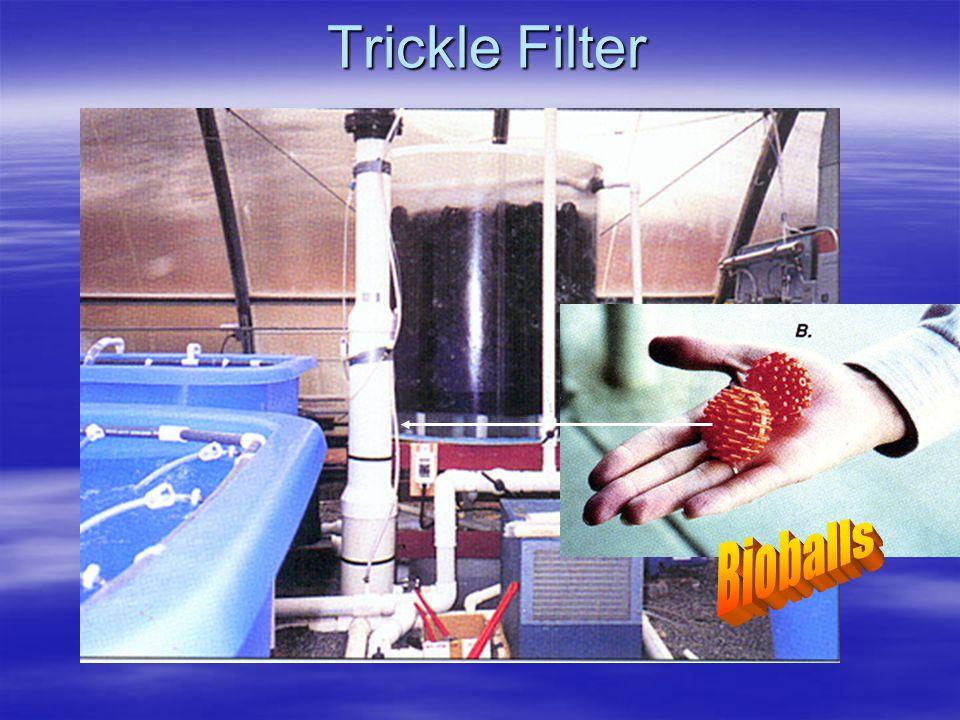 Trickle Filter