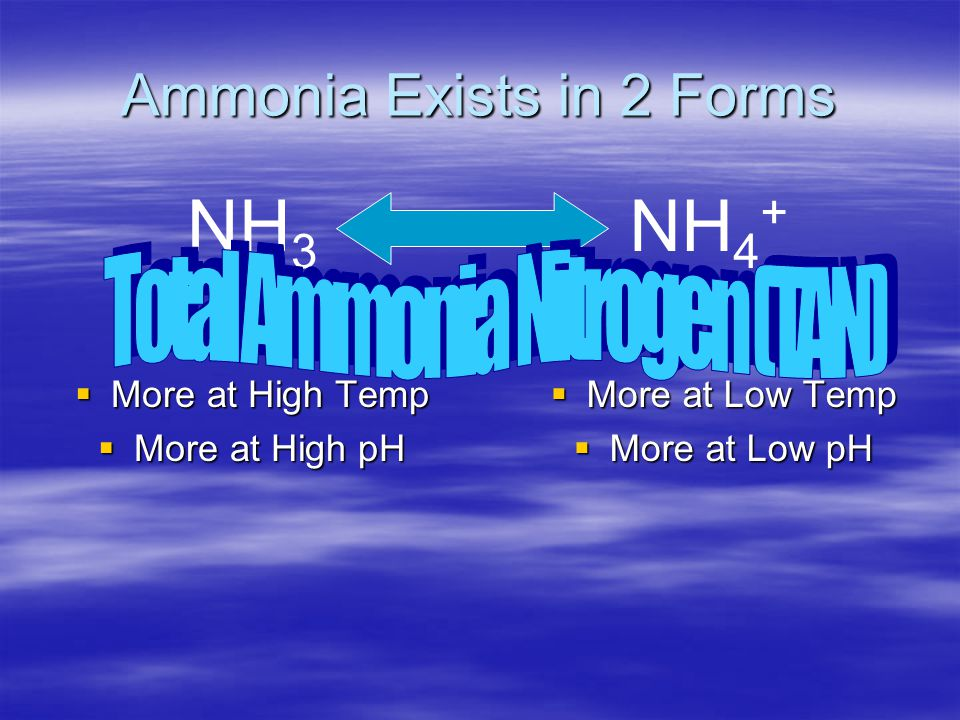 Ammonia Exists in 2 Forms  Toxic  More at High Temp  More at High pH  Less Toxic  More at Low Temp  More at Low pH NH 3 NH 4 +
