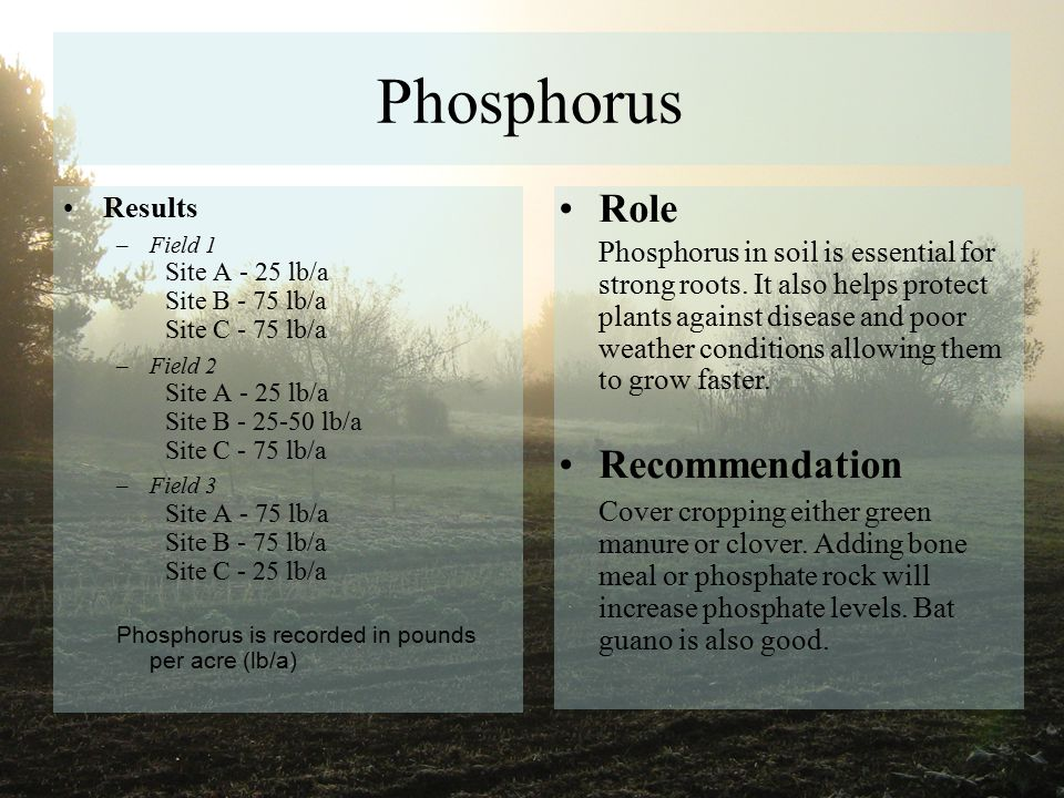 Phosphorus Results –Field 1 Site A - 25 lb/a Site B - 75 lb/a Site C - 75 lb/a –Field 2 Site A - 25 lb/a Site B - 25-50 lb/a Site C - 75 lb/a –Field 3 Site A - 75 lb/a Site B - 75 lb/a Site C - 25 lb/a Phosphorus is recorded in pounds per acre (lb/a) Role Phosphorus in soil is essential for strong roots.