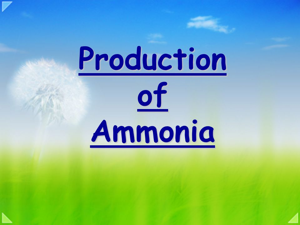 Production of Ammonia