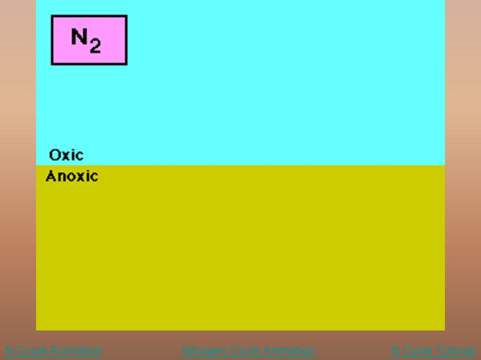 Nitrogen Cycle AnimationN Cycle TutorialN Cycle Animation