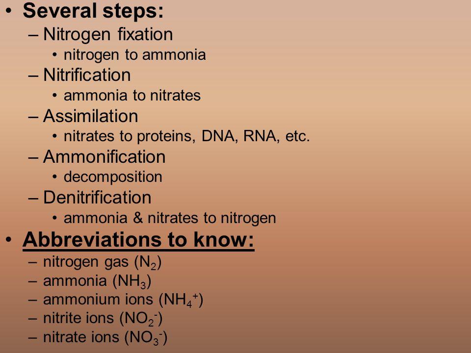 Several steps: –Nitrogen fixation nitrogen to ammonia –Nitrification ammonia to nitrates –Assimilation nitrates to proteins, DNA, RNA, etc. –Ammonific
