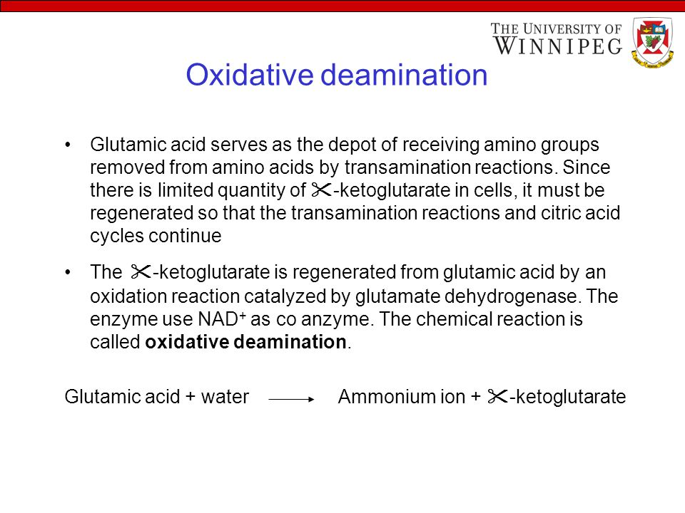 Oxidative deamination Glutamic acid serves as the depot of receiving amino groups removed from amino acids by transamination reactions. Since there is