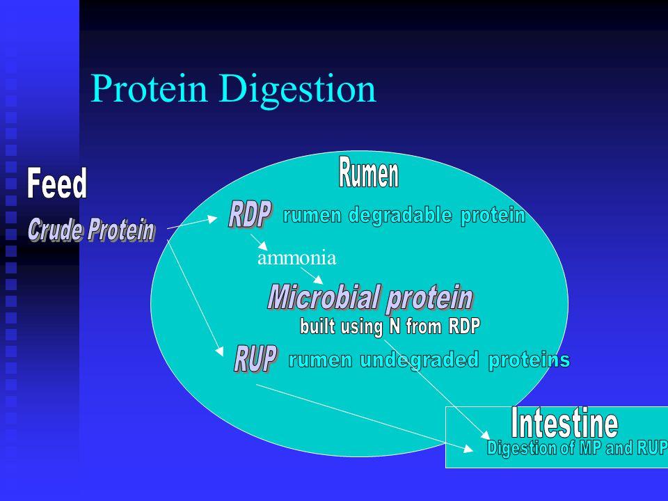 Protein Digestion ammonia
