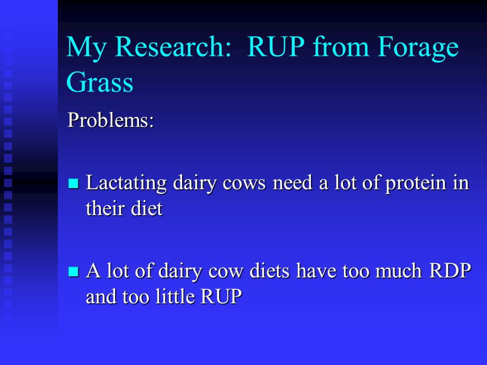 My Research: RUP from Forage Grass Problems: Lactating dairy cows need a lot of protein in their diet Lactating dairy cows need a lot of protein in their diet A lot of dairy cow diets have too much RDP and too little RUP A lot of dairy cow diets have too much RDP and too little RUP