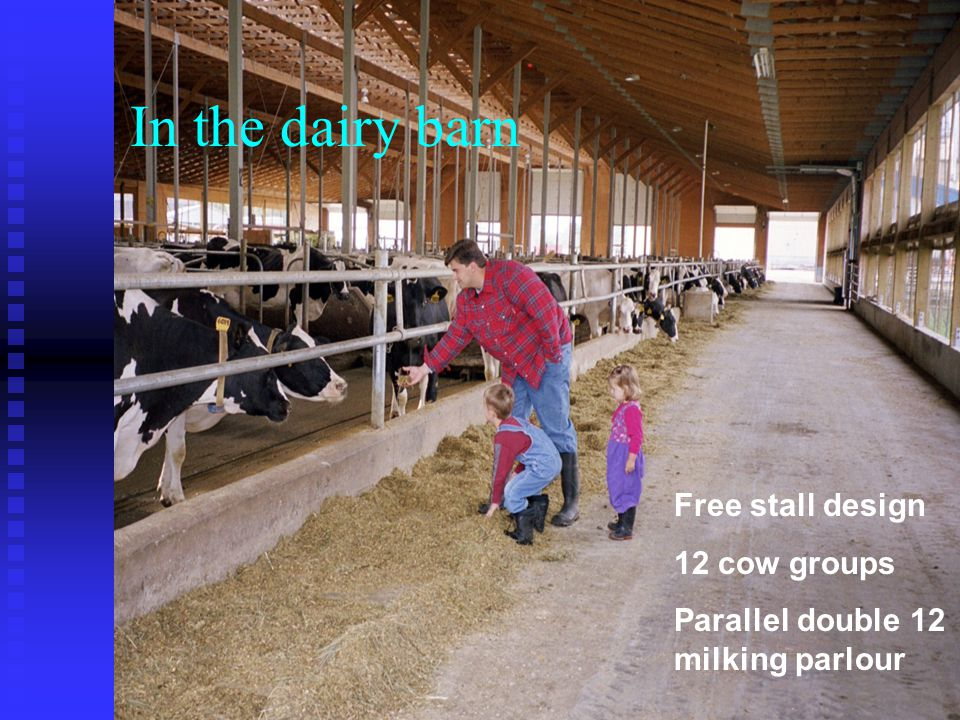 In the dairy barn Free stall design 12 cow groups Parallel double 12 milking parlour