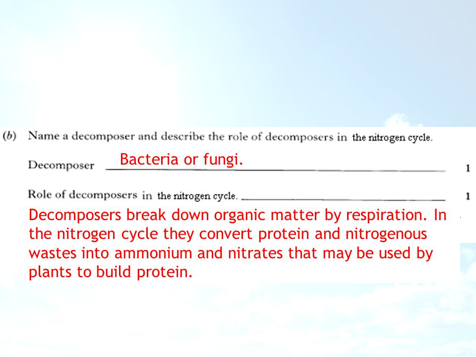 Bacteria or fungi. Decomposers break down organic matter by respiration. In the nitrogen cycle they convert protein and nitrogenous wastes into ammoni