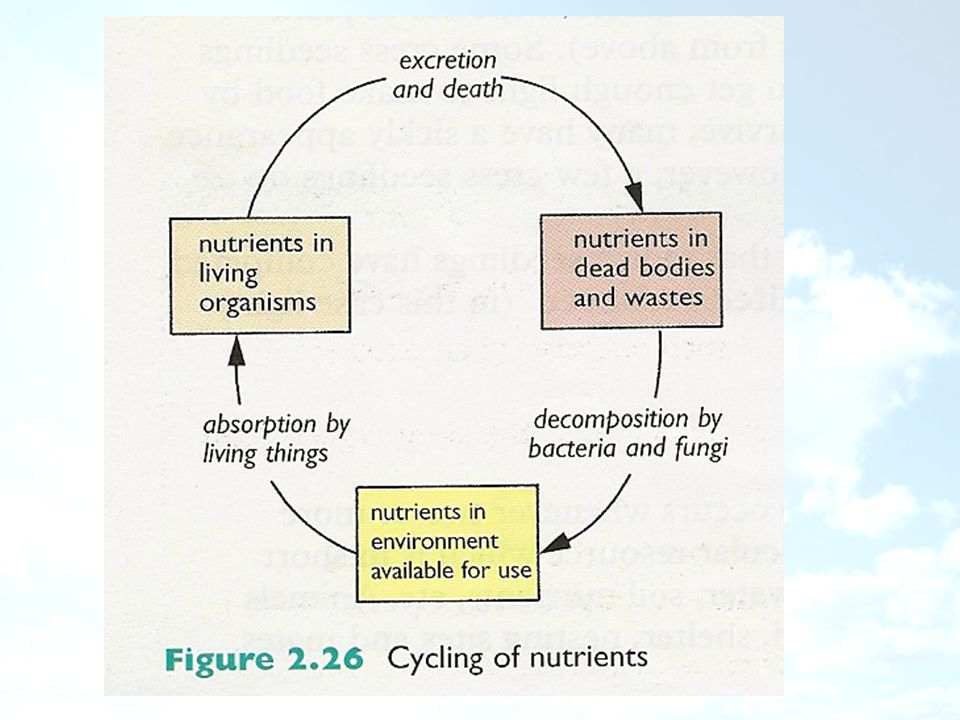 The Importance of Nitrogen Why is nitrogen important to living things?
