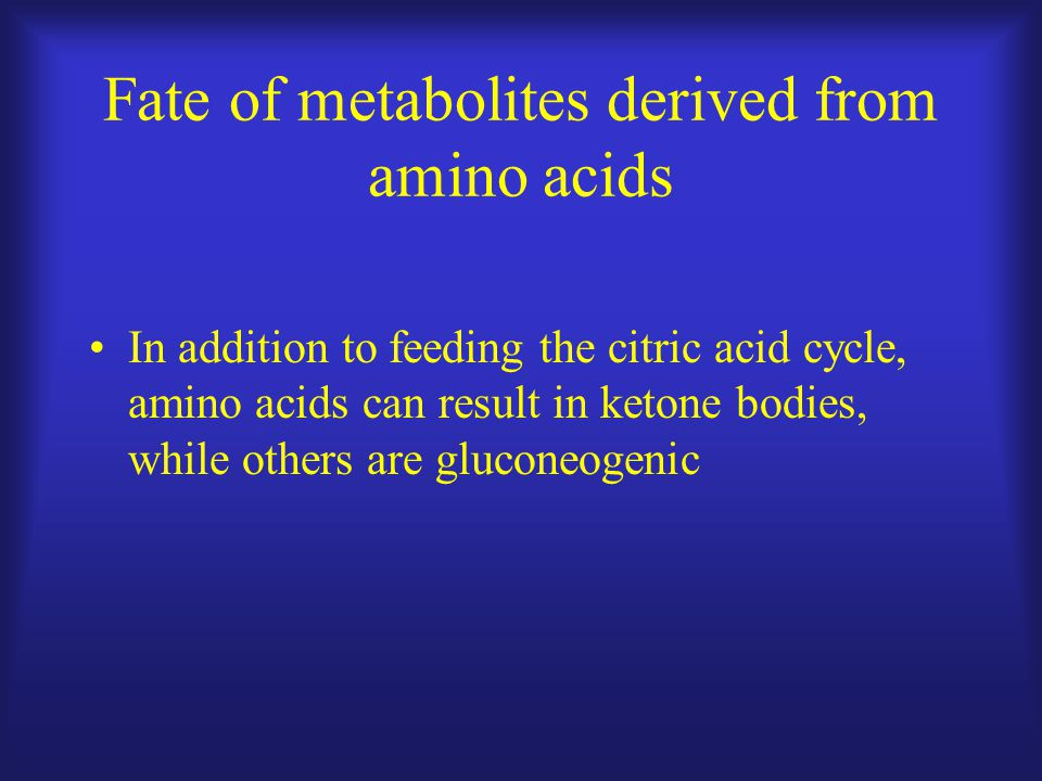 Fate of metabolites derived from amino acids In addition to feeding the citric acid cycle, amino acids can result in ketone bodies, while others are gluconeogenic