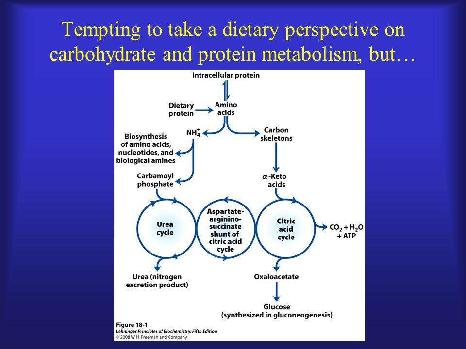 Tempting to take a dietary perspective on carbohydrate and protein metabolism, but…