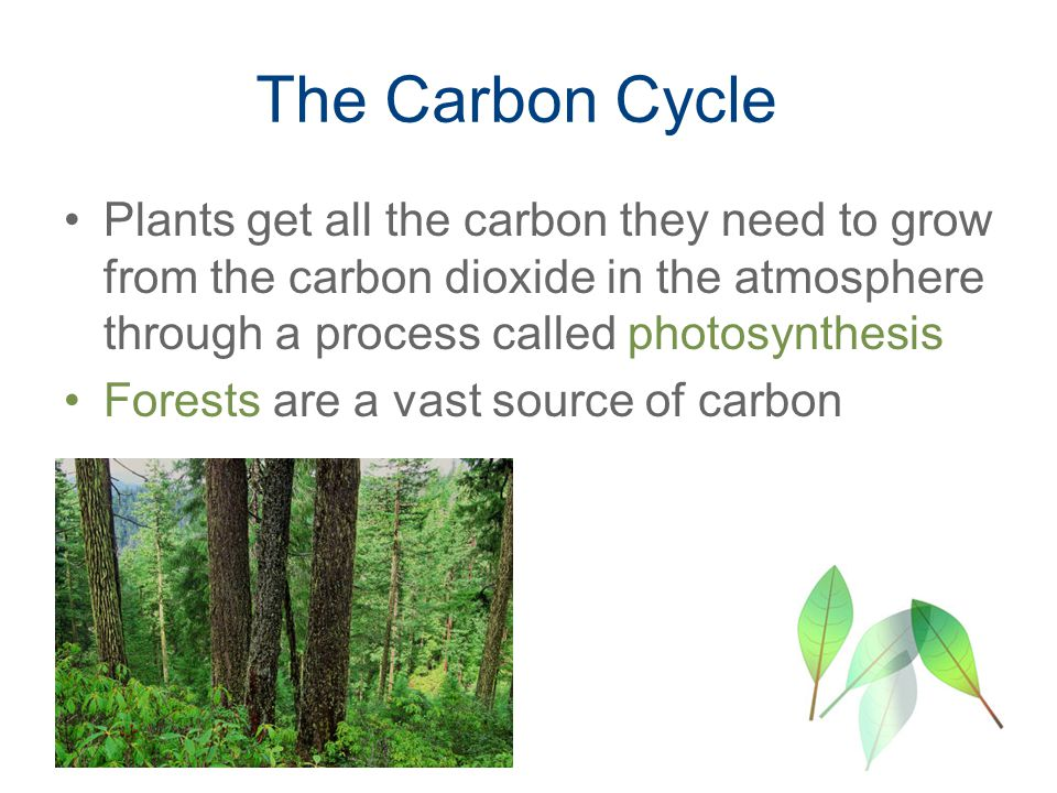 The Carbon Cycle Plants get all the carbon they need to grow from the carbon dioxide in the atmosphere through a process called photosynthesis Forests are a vast source of carbon
