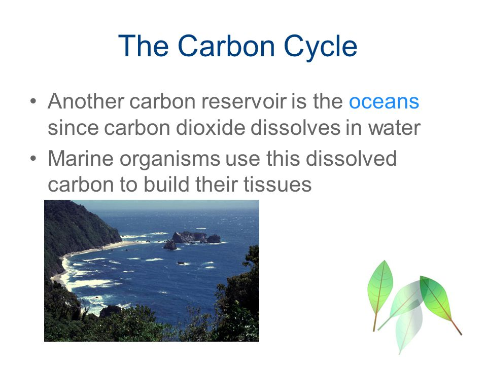 The Carbon Cycle Another carbon reservoir is the oceans since carbon dioxide dissolves in water Marine organisms use this dissolved carbon to build their tissues
