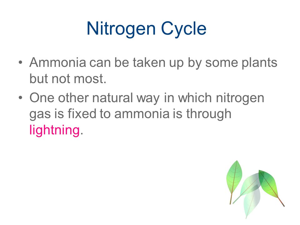 Nitrogen Cycle Ammonia can be taken up by some plants but not most.